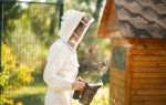О промышленном пчеловодстве, выгодно ли держать пчел, рентабельность пасеки