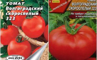 Томат волгоградский розовый: характеристика и описание сорта, отзывы, фото, урожайность – все о помидорках
