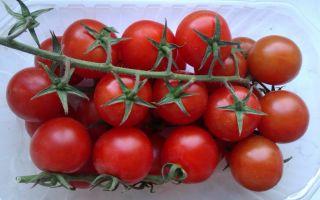 Томат ажур: характеристика и описание сорта, особенности выращивания – все о помидорках