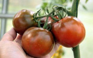 Томат кумато: характеристика и описание сорта, особенности выращивания – все о помидорках