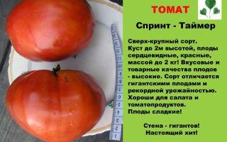 Томат деликатес: описание сорта, характеристика, выращивание, отзывы, фото – все о помидорках