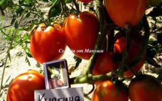 Томат княгиня: описание сорта, характеристика, выращивание, отзывы, фото – все о помидорках