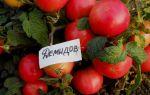 Томат демидов: характеристика и описание, отзывы, фото, урожайность сорта – все о помидорках