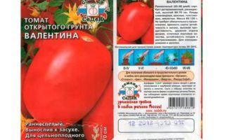 Томат валентина: характеристики и описание сорта, урожайность, отзывы, фото – все о помидорках