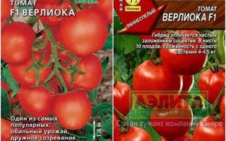 Томат верлиока: характеристика и описание сорта, отзывы, фото, урожайность – все о помидорках