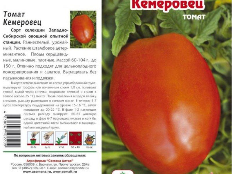 Оэдема листьев томатов - 9ogorod