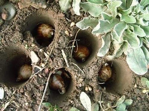 О посадке и уходе за видами ирисов в открытом грунте, размножение