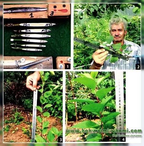 О прививочном секаторе: инструмент для прививки плодовых деревьев