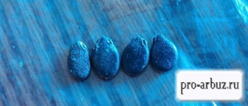 О проращивании семян арбуза перед посадкой: правила замачивания для посадки