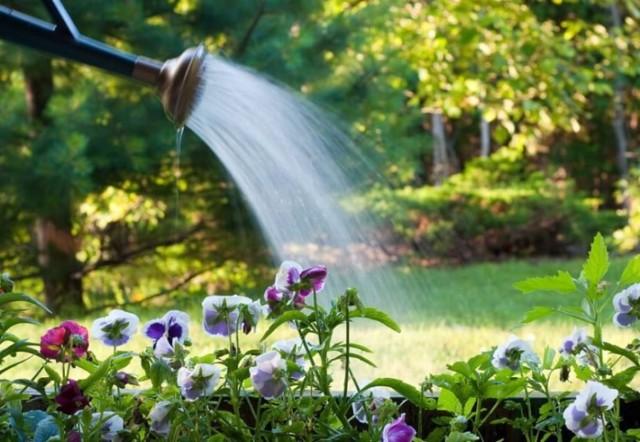 О гравилате городском и других сортах растения: как выглядят, характеристики