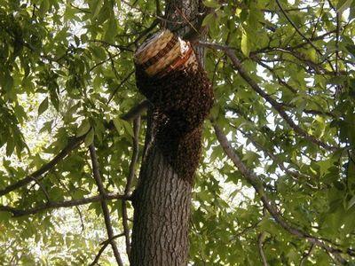 О ловушке для пчел: как сделать своими руками из бутылки, размеры и чертежи
