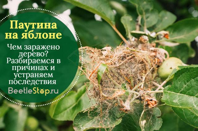 О гусеницах на яблоне в паутине: как бороться, чем обработать и опрыскивать