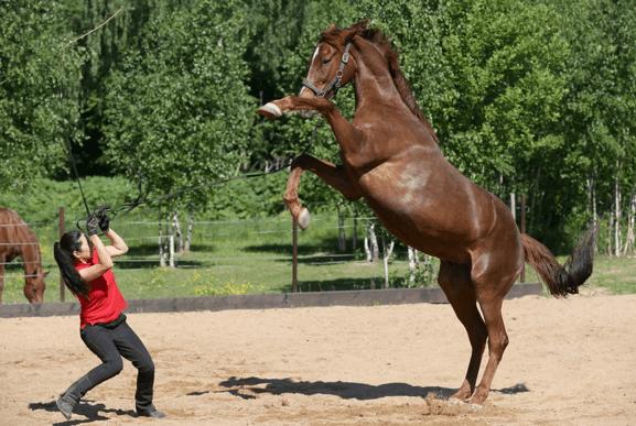 О психологии лошадей: как научить коня доверию и приучить к дресировке