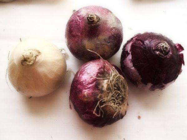 О посадке гиацинтов в открытый грунт осенью (когда высаживать семена)