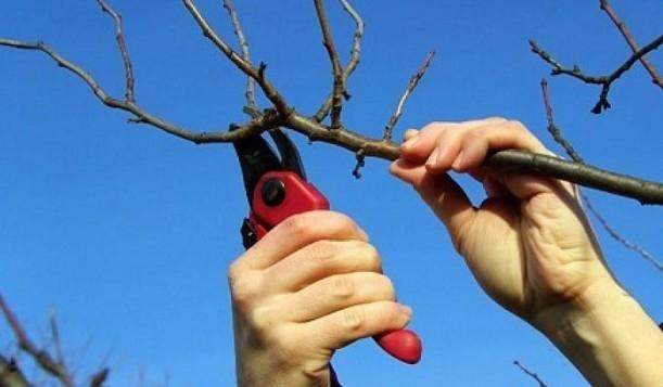 Как ухаживать за абрикосом в средней полосе, правильная посадка саженцами