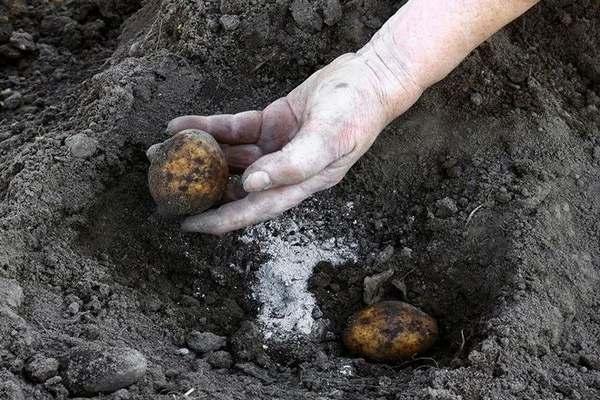 Какое удобрение лучше для картофеля при посадке в лунку по весне