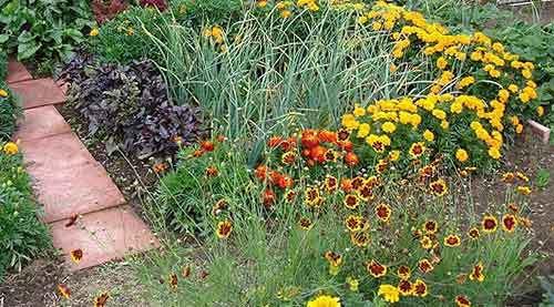 Можно ли посадить арбузы рядом с дынями: совместимость с другими культурами