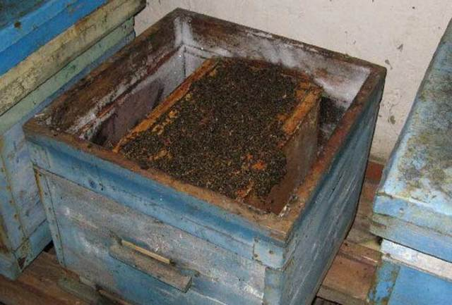 О работах на пасеке в августе: в подмосковье, пчелы в сентябре месяце, в лежаках