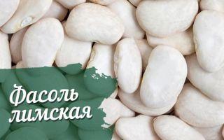 О лимской (луновидной) фасоли: особенности выращивания сладкого боба