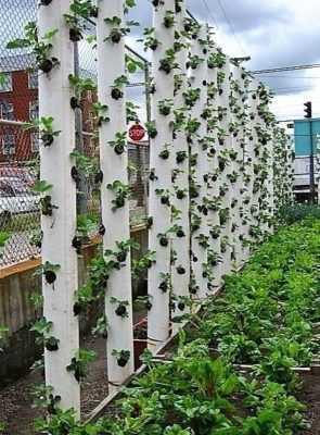 О вертикальных грядках для клубники своими руками: выращивание в трубах пвх