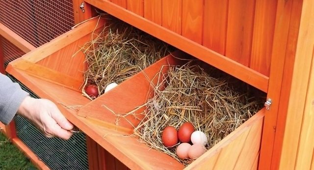 О гнездах и насестах для кур несушек: как сделать своими руками и приучить птицу