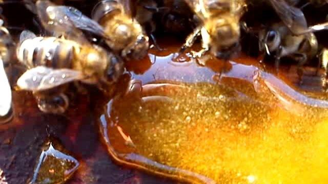 О подкормке пчел на зиму сахарным сиропом, когда начинать кормить пчел в зиму
