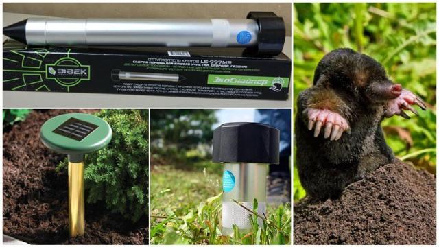 О методах борьбы с кротами и землеройками на садовом участке: способы защиты