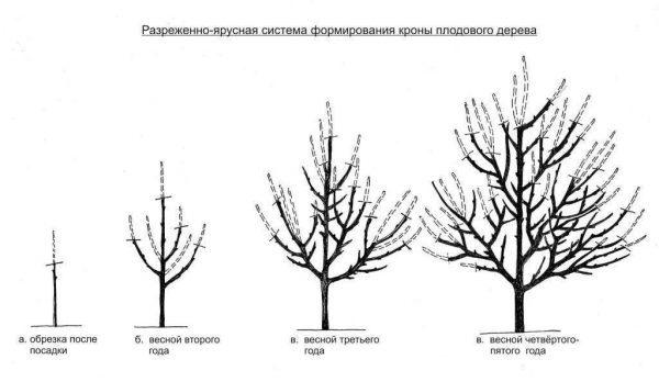 О груше любимица клаппа: описание и характеристика сорта, особенности