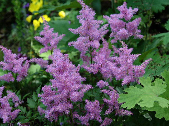 О многолетниках для дачи, цветущих все лето: названия, описание и характеристики