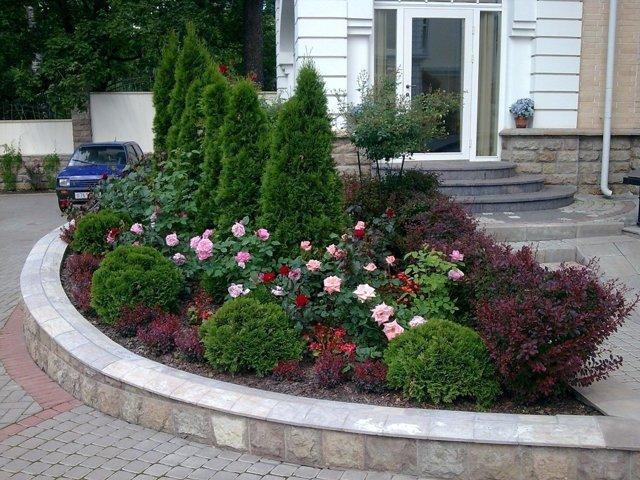 О посадке роз: когда можно и как правильно сажать в открытый грунт осенью