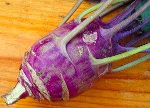 О капусте кольраби: как правильно посадить рассаду, выращивание и уход