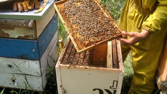 О подкормке пчел в августе сиропом, закармливание, стимулирующая подкормка