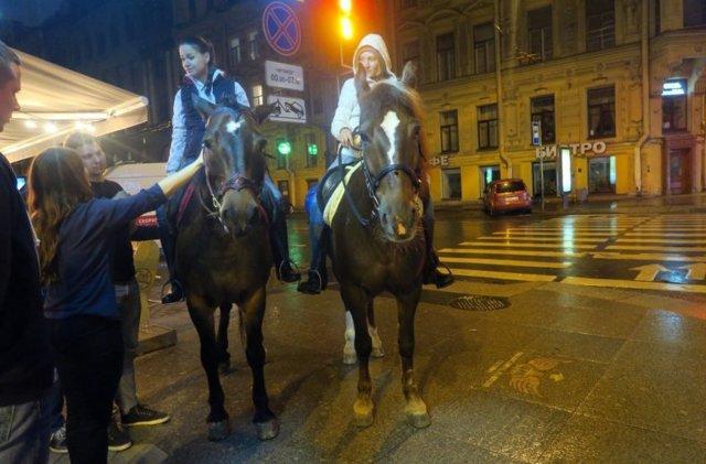 О глазах лошади: как видят кони, зачем лошадям шоры, строения глаза и зрение