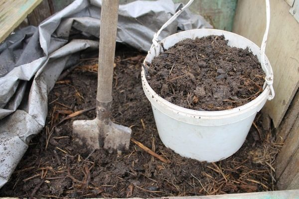О навозе для огурцов: каким лучше удобрить, подкормить, полить