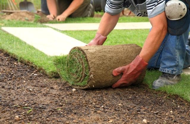 О правилах устройства газона на даче самостоятельно: подробное руководство