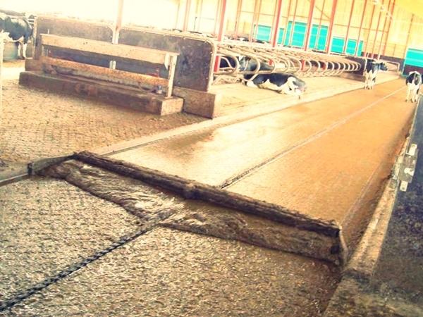 О коровьем навозе в качестве удобрения, системы навозоудаления в коровниках