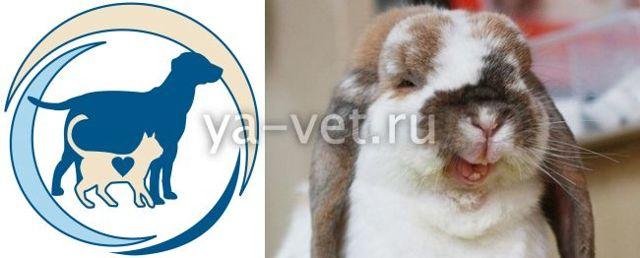 О геморрагической болезни кроликов: симптомы вирусной вгбк, лечение чумки