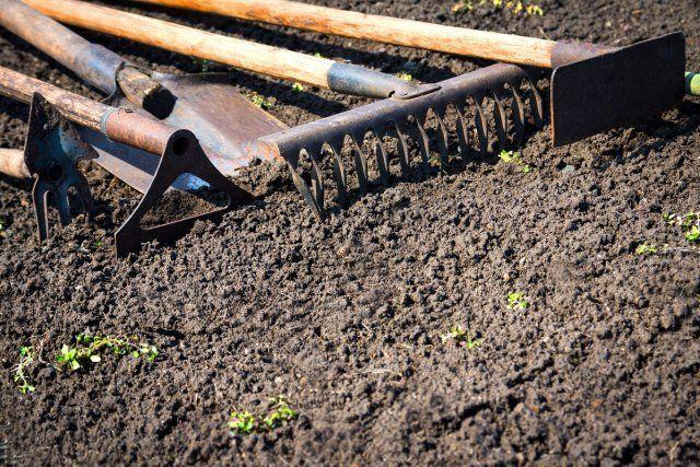 О том, как правильно высаживать кабачки в открытый грунт: расстояние, температура