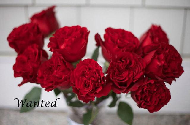 О розе ред: описание и характеристики сортов, агротехника