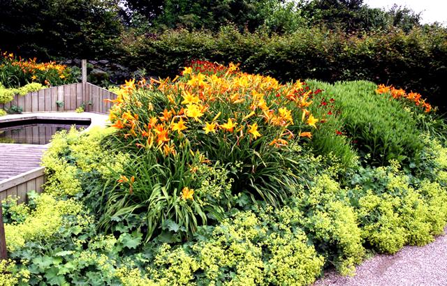 О лилейниках в дизайне сада: с какими цветами сочетается лилейник на клумбе