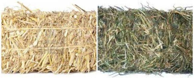 Мульчирование картошки соломой, посадка под пленку и мульчу, советы
