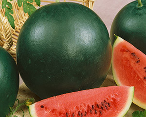 О лучших сортах арбуза: семена скороспелых и ранних видов для открытого грунта