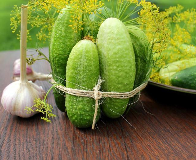 О выращивании огурцов в открытом грунте: секретные способы ускорить рост