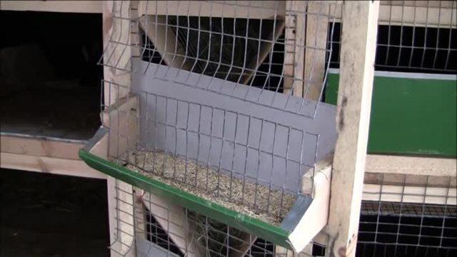 О кормушках для кроликов: как сделать кормушку своими руками для зерна