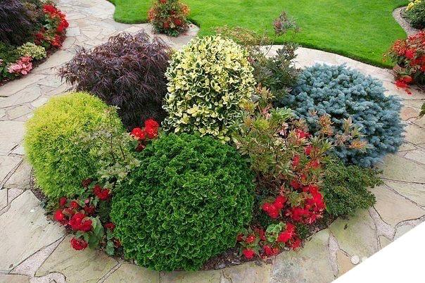 О клумбах из хвойников и цветов многолетников: схема посадки с розами и туей