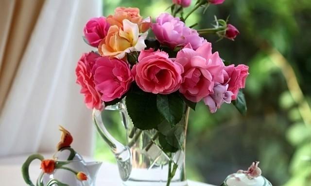 О посадке отростка розы из вазы: как правильно срезать и выращивать