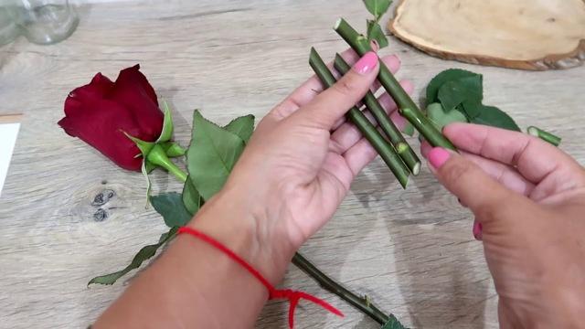 О розе клэр остин (claire austin): описание и характеристики сорта роз