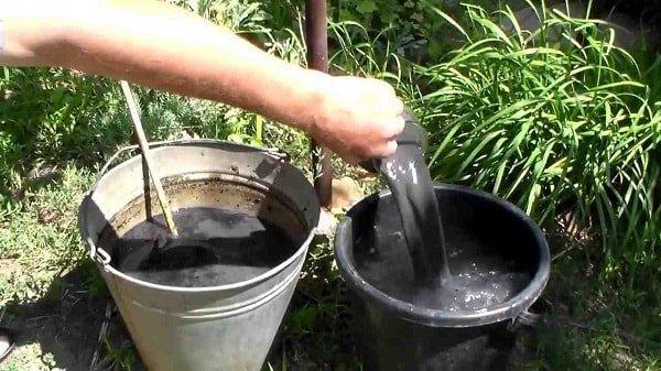 О подкормке садовой земляники во время цветения и завязывания ягод