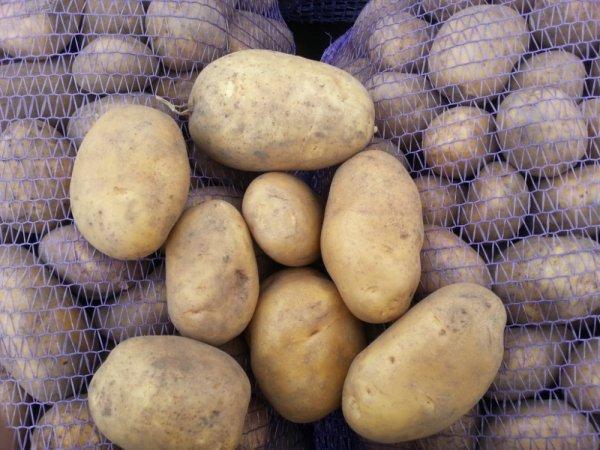 О картофеле бриз: описание семенного сорта картофеля, характеристики, агротехника