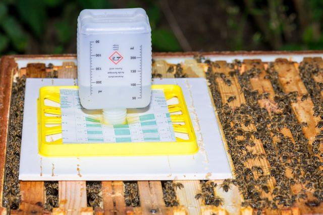 О муравьинке для пчел: инструкция, обработка щавелевой и муравьиной кислотой